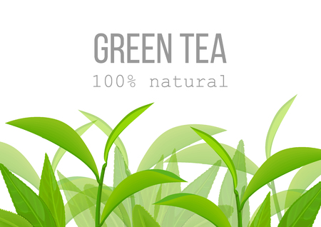 Green tea leaves and twig label card. 100 percent natural. Çizim
