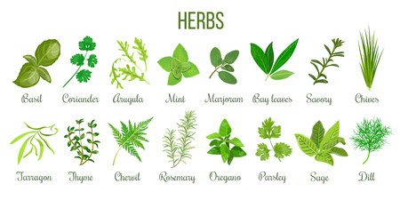 Big set of realistic culinary herbs. sage, thyme, rosemary, basil Stock Photo - 83274963