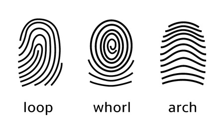 Three fingerprint types on white background. Loop, whorl, arch patterns