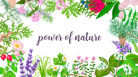Big vector set of beautiful flowers and plants. Ornament with text power of nature. Rose, Geranium, lavender, mint, melissa, Chamomile, pine, juniper, rosehip etc. For wallpaper, cards, invitations Illustration