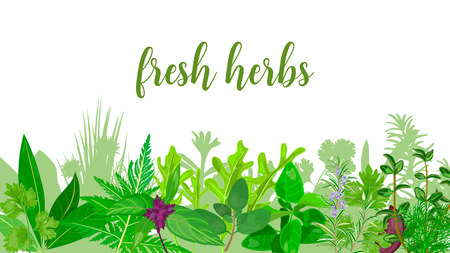 Popular Realistic herbs and flowers with text set in green color Peppermint, lavender, sage, melissa, For health care, invitations, greetings, design, label, banner, poster, Card, packing, tag
