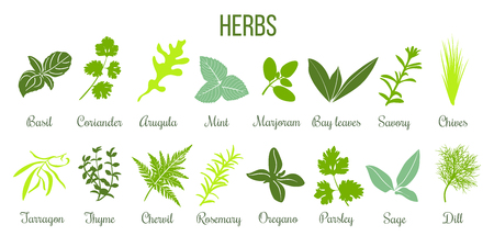 Big icon set of popular culinary herbs. Flat style. Basil, coriander, mint, rosemary, sage, basil, thyme, parsley etc. For cooking, cosmetics, store, health care, tag label, food design Vettoriali