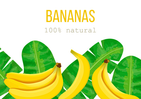 Bananas, tropical palm leaves, dense jungle. Vector illustration with tropic summertime motif. text 100 percent natural. Can be used as background texture, wrapping paper, textile, wallpaper design