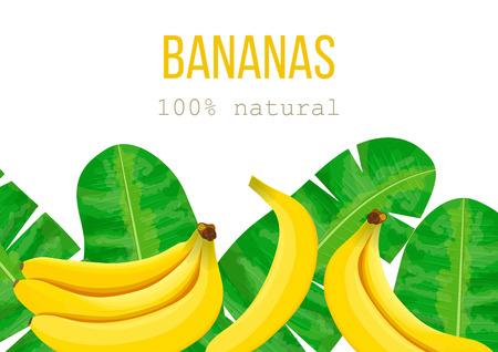 Plátanos, hojas de palma tropical, selva densa. Ilustración de vector con motivo de verano tropical. texto 100 por ciento natural. Puede ser utilizado como textura de fondo, papel de regalo, textil, diseño de papel tapiz