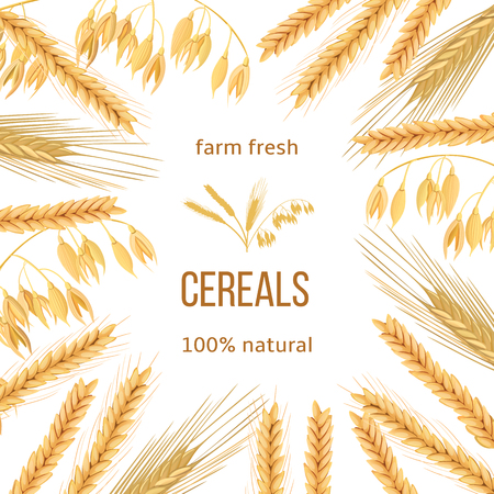 grain fields: Wheat products banner.