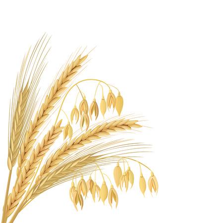 produits céréaliers: Blé, orge, avoine et seigle. Quatre grains de céréales avec des oreilles, gerbe. espace vide, isolé. Vecteur d'icône 3D. Étiquette horizontale Pour la conception, la cuisine, la boulangerie, les étiquettes, les étiquettes, le textile Illustration