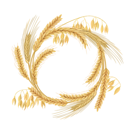 Wreath made of Wheat, barley, oat and rye spikes. Four cereals grains with ears, and free space