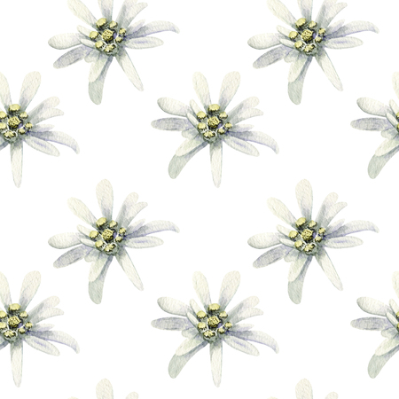 Edelweiss flowers isolated. watercolor seamless pattern illustration Stock Photo