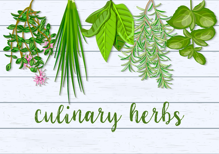 Wooden Scandinavian background of hanging farm fresh culinary hanging herbs. Greenery basil, rosemary, chives, thyme,