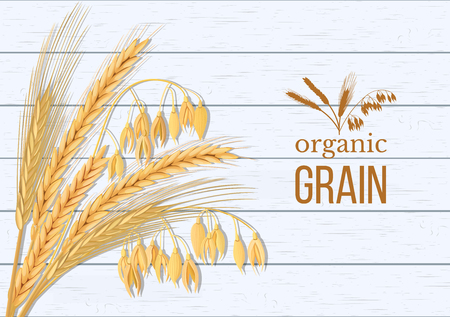 Wheat, barley, oat and rye set. Four cereals spikelets with ears, sheaf and text premium foods, natural product. Illustration