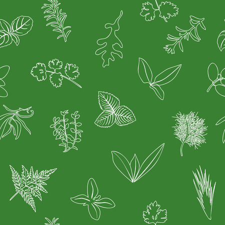 Popular culinary herbs seamless pattern. realistic style. icon outline sketch on green. Basil, coriander, mint, rosemary, basil, Stock Vector - 101453381