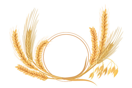 Wheat, barley, oat and rye set. Four cereals spikelets with ears, sheaf and text premium foods, natural product. 3d icon vector. Round label. For design, cooking, bakery, tags, labels textile Ilustração Vetorial