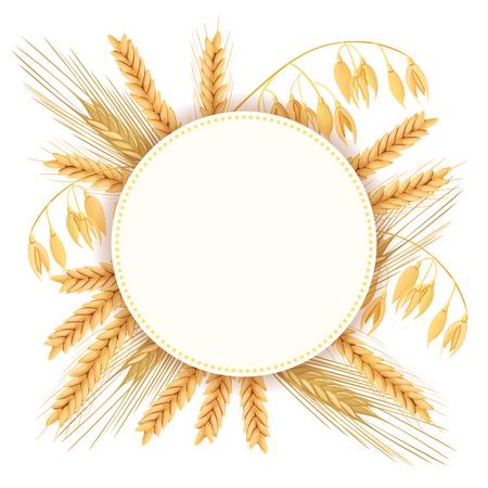 Trigo, cebada, avena y centeno. Conjunto de vectores de iconos 3D. Cuatro granos de cereales y mazorcas. Etiqueta redonda, texto granja fresco 100 por ciento natural. semillas y plantas. Puede utilizarse para cocinar, panadería, etiquetas, etiquetas, textiles