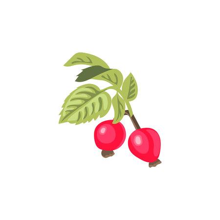 Ramo di rosa canina con foglie e fiori. Rosa selvatica. Rosa canina. Rosa canina noto anche come rose haw o rose hep. Illustrazione vettoriale. Vettoriali