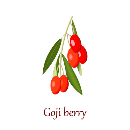 Fresh red Goji berry or gojiberry or boxthorn or goji berry or wolfberry isolated. vector illustration. For cooking, cosmetics, Herbal and alternative medicine, health care, labels, food design Illustration