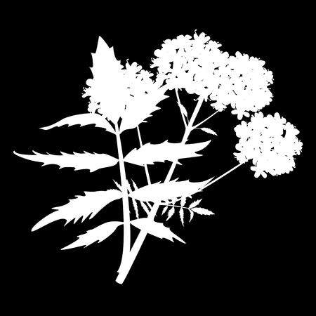 Valerian isolated icon. white silhouette. Vector