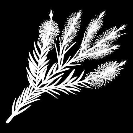 Ramitas de melaleuca. icono aislado del árbol del té. silueta blanca. Ilustración vectorial