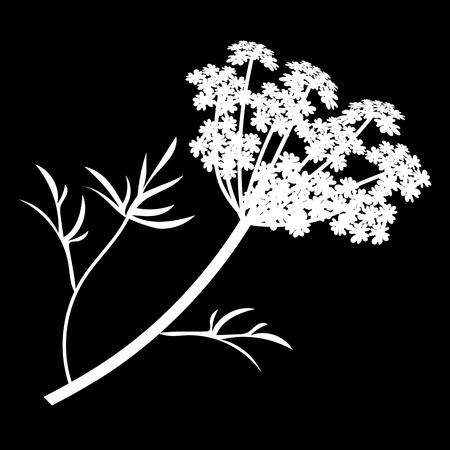 Anis ou Angelica archangelica fleurs icône isolé. silhouette blanche. Illustration vectorielle
