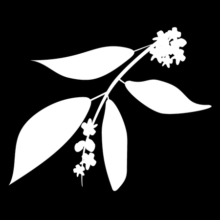 Chandan or sandalwood plant isolated icon. white silhouette. Vector illustration Иллюстрация