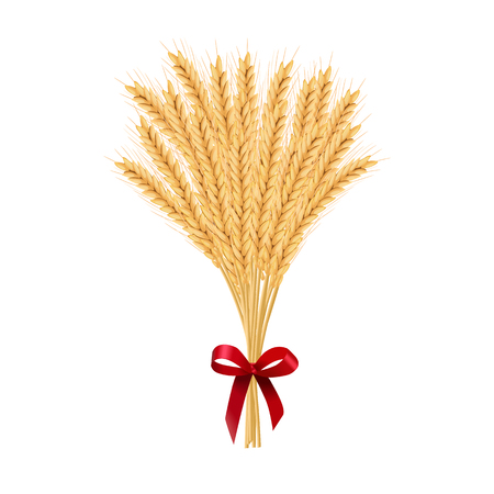 Sheaf of wheat. Reap of spiked grain heads. Christmas sheaf. Bunch of crop ears. Spikes, Julkarve, Julenek, vector illustration. for Christmas decoration, cards, bakery, food and decorative design