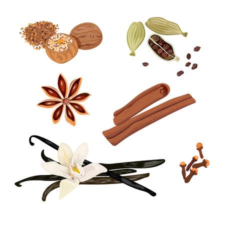 Set vector icons spices. Cardamom, star anise, nutmeg, vanilla flower and sticks, cloves, cinnamon. Vector Illustration. healthy lifestyle, healthcare cosmetics ointments perfumery baking 向量圖像