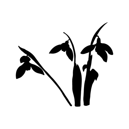 Snowdrop spring flowers black silhouette. Delicate Galanthus nivalis flower, spring symbols. Snowdrop blossoms. Sketsh style ink pen. Vector illustration. Engraving. For prints, web, decoration Çizim