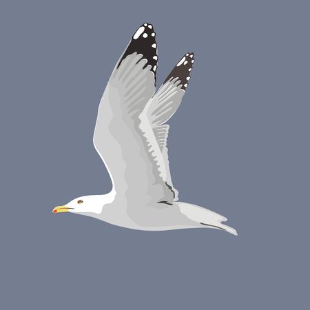 The common seagull mew gull European herring gull. Vector illustration. Element for your design. Flying bird, white feathers, Illustration