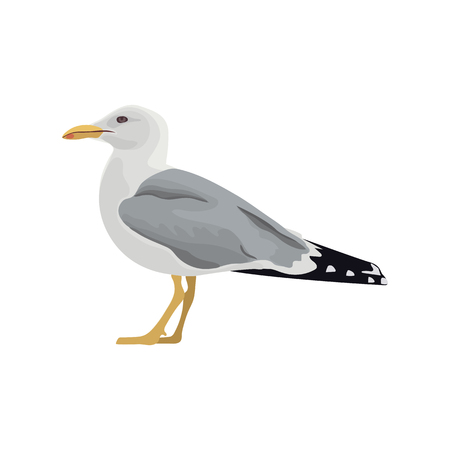 The common seagull mew gull European herring gull. Vector illustration. Element for your design. Resting curious standing sea bird, white feathers, legs, yellow beak, folded spotted wings, web, prints