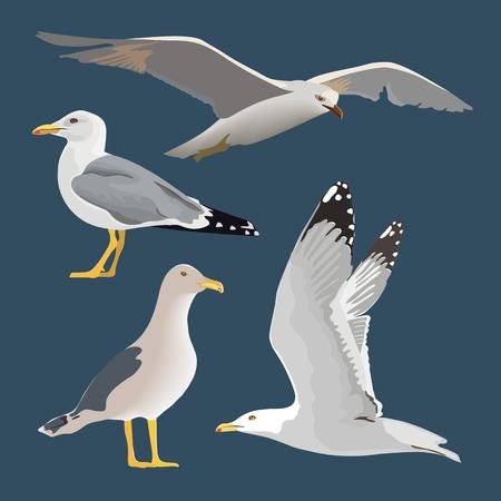 Conjunto de 4 gaviotas. Flotando, volando, de pie, con las alas plegadas, descansando, curioso. Volar maullido. cuello largo, plumas blancas,