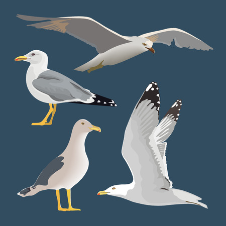 Set of 4 sea gulls. Hovering, soaring, standing, with folded wings, resting, curious. Flying mew. long neck, white feathers,