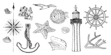Naval set nautical symbols. Gulls, helm, steering wheel, anchor, light house, coral, shell, wind rose, swellfish, sea star, starfish,