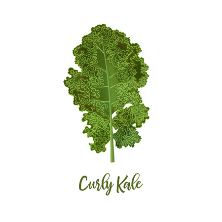 Curly kale. Food concept. Fresh juicy raw close up leaf cabbage isolated. Healthy diet, vegetarian food, spring summer