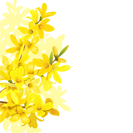 Fluffy blossoming yellow spring tree template. Forsythia suspensa, Golden Bell, flowers frame on the left. Place for text, copy space. Vector illustration. Cocept for prints, cards, textile, invitation
