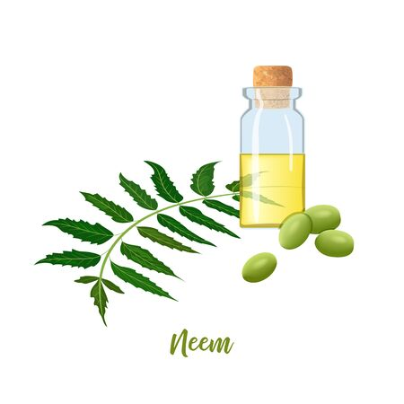 Glass bottle with cor, Neem oil, leaf branch, flowers and pods. Ayurveda Herb. vial. Oilplant for medicine, cosmetics