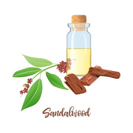 Sandalwood essential oil in glass bottle with cork, Chandan leaves, sticks, branch. Card template text. Oilplant oilbearing for cosmetics, medicine, pharmaceutical, aromatherapy, perfume, spa ayurveda