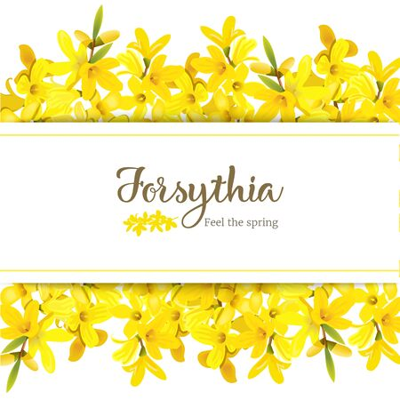 Forsythia suspensa card template with copy space on stripe, fluffy blossoming yellow spring tree. Golden Bell