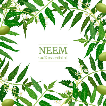 Neem leaf branch boxing frame, flowers and pods. Ayurveda Herb template.