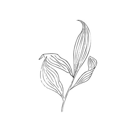dried flowers, dry grass on a white background, Hand drawn engraving illustration, minimalism style.