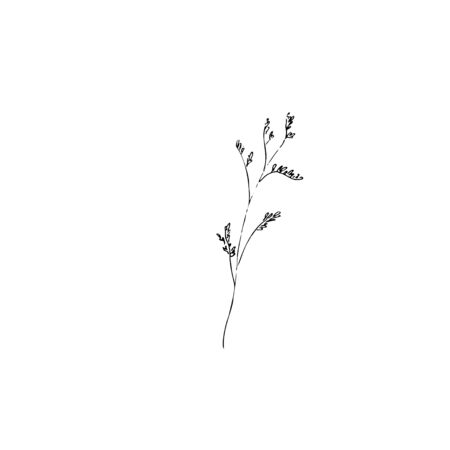 dried flowers, dry grass on a white background, tutsan, hypericum Hand drawn engraving illustration,