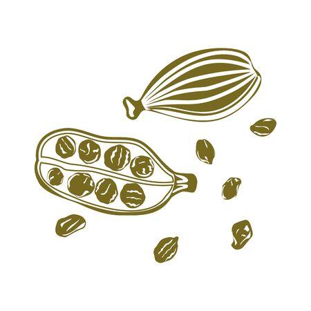 Cardamom, flat vector icon isolated on white Ilustracja