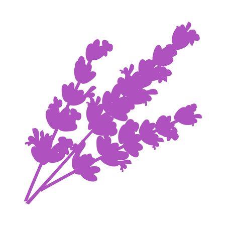 Lavender flat flower Isolated lavender on white