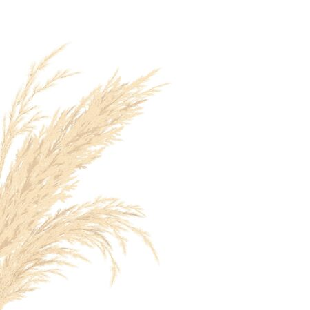 Silver golden Pampas grass Card template frame on the left with copy space. Vector illustration.