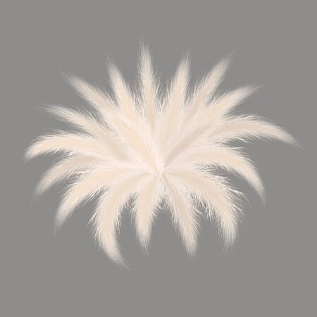 Pampas silver grass starshaped bouquet on grey background. Vector illustration. stellar composition ornamental fluffy grass. feathery grass head plumes, for floral arrangements, displays, decoration