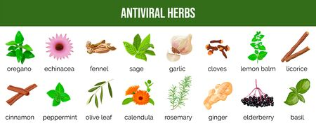 Set of antiviral herbs. food sources and spices to neutralize viruses. healthy lifestyle. Stop coronavirus. Herbal and alternative medicine, coronavirus prevention, health care. Vector illustration
