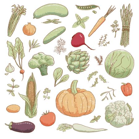 Collection of hand-drawn popular cartoon vintage style vegetables and coolinary herbs, vector illustration. For prints, food design, menu, labels Vettoriali