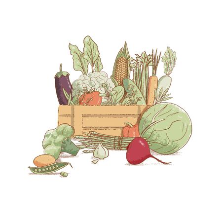 Wooden crate with collection of hand-drawn popular vintage style seasonal vegetables and coolinary herbs,