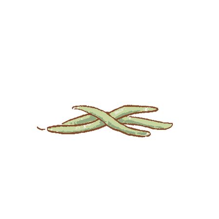 Bunch of Fresh Green beans stems isolated icon. Spring Rareripes. hastings, farm market, Vector illustration. hand-drawn