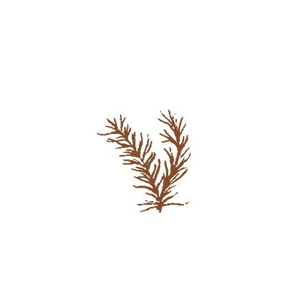 Bunch of Fresh green rosemary twigs isolated icon. Spring Rareripes. hastings, farm market, Vector illustration. hand-drawn vintage style popular seasonal raw coolinary herb cooking Healthy lifestyle Ilustração