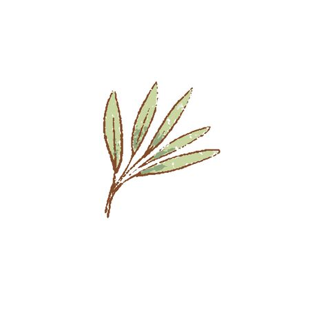 Fresh green Sage leves isolated icon. Spring Rareripes. hastings, farm market, Vector illustration. hand-drawn vintage style popular seasonal raw coolinary herb cooking Healthy lifestyle