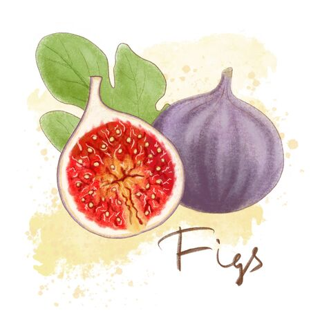Ripe purple figs, leaf isolated. Fresh fruit icon whole and halved. Delisious food, vitamins, healthe lifestyle